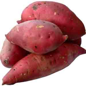 薩摩芋の栽培は肥前が早かった(...
